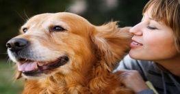 Kur mit dem Hund